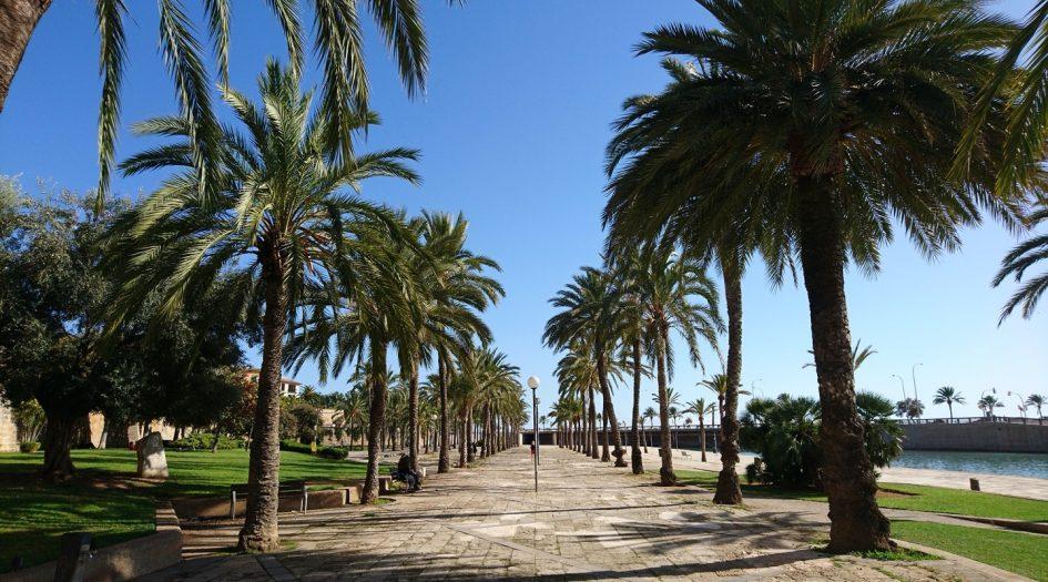 Пальмский марафон(Zafiro Palma Marathon) и полумарафон