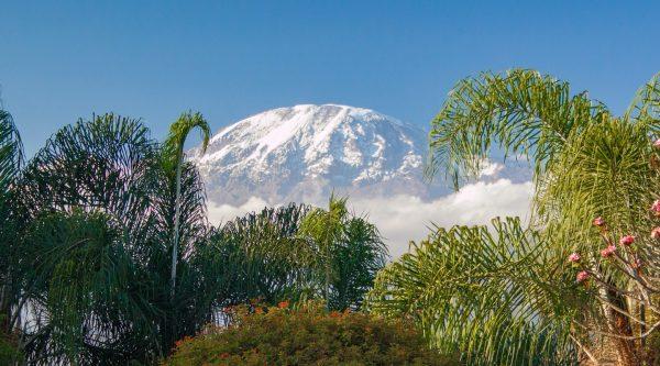 Килиманджарский марафон (Kilimanjaro Premium Lager Marathon) и полумарафон